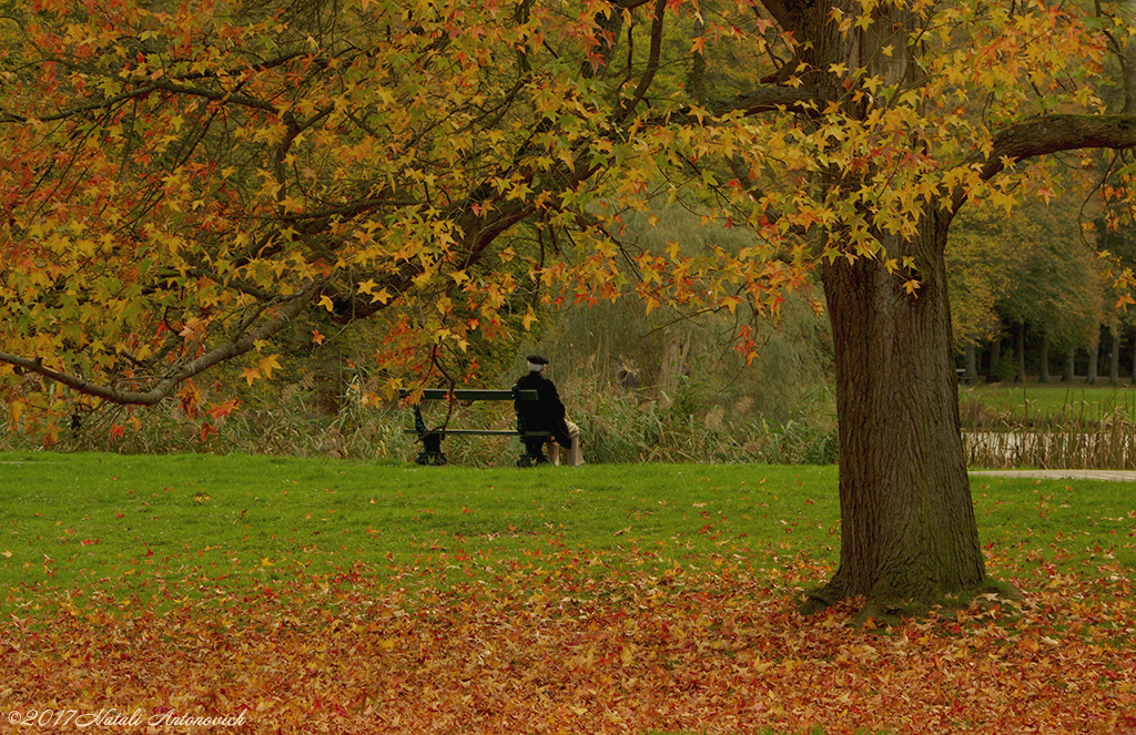 "Album  ""Image without title"" 